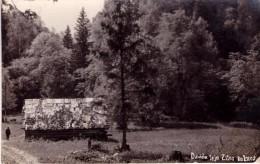 Latvia.Lettland.Kurland.ZILIE KALNI.DAVIDA LEJA.1932 - Latvia