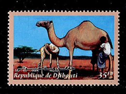 (cl.11 - P.21) Djibouti ** N° 824 (ref. Michel Au Dos) -  Dromadaires - - Djibouti (1977-...)