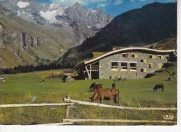 PEISEY-NANCROIX (73-Savoie)  Ferme, Troupeau De Vaches, Porte Du Parc De La Vanoise, Et Mont Pourri, Ed. Iris 1975iron - Autres Communes