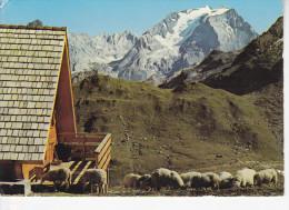 PRALOGNAN-LA-VANOISE (73-Savoie)  Refuge De La Valette, Grande Casse, Troupeau De Moutons, Ed. André 1970 Environ - Pralognan-la-Vanoise