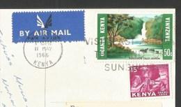 LION African Wild Life Kenya Nairobi 1966 - Lions