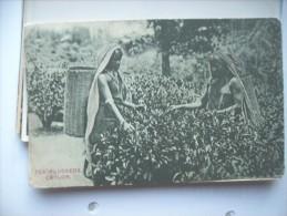 Asia Sri Lanka Ceylon Tamil Women Tea Pluckers - Sri Lanka (Ceylon)