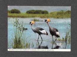 ANIMAUX - ANIMALS - EAST AFRICAN CROWNED CRANE - GRUE À COURONNE DE L' AFRIQUE DE L'EST - AFRICA - BY JOHN HINGE - Oiseaux