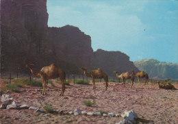 Jordan PPC Camels Near Petra Chammeaux Cammei JERUSALEM 1966 To SLAGELSE Denmark (2 Scans) - Jordanien