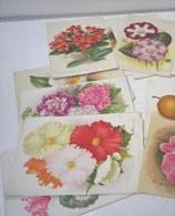 RARE SUPERBE LOT 12X Litho Lithographie Dim 27x18 Cm Illustrateur A. GOOSENS Ricker & Mendel La Tribune Horticole Fleur - Collections