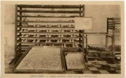 CAMBODGE - PNOM-PENH - Station Séricicole - Echantillons De Soies Et Cocons Provenant De Croisement - Cambodja