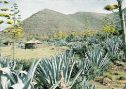 Lesotho Africa Afrique - Hale Tume - Traditional Hut - Hutte - Unused - 2 Scans - Lesotho