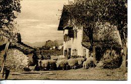 N°46087 -cpa Saint Jean Pied De Port -ferme Basquaise- - Fermes