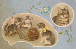 CHAT )) CHATONS ET ACCORDEON - Chats