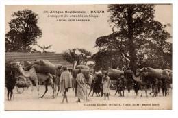 SENEGAL - Afrique Occidentale DAKAR Transport Des Arachides Au Sénégal . Arrivée Dans Une Escale - Senegal