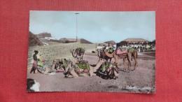 Camels Aden ===        ======== ====2146 - Yemen