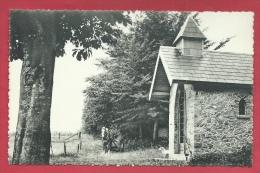 Malvoisin - Chapelle Saint-Antoine ( Voir Verso  ) - Gedinne
