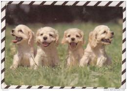 Q896 4 CHIOTS - Hunde