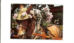 Pub Grant L Robertson :  Buggy Rider /New Orleans Ane  - 2 Scans Recto--verso Timbre 1997 Jacqueline Cochran Usa - Anes