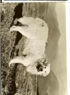 CPMGF 65.000.01 Ed La Cigogne - Chien  Des Pyrénées - Hunde