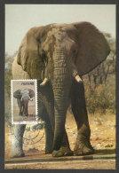 SWA Namibie Afrique ELÉPHANT Rare Carte Maximum Namibia Elephant Rare Maxicard - Elephants