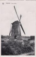 Kasterlee   Zwarte Molen Windmolen           Nr 5961 - Kasterlee