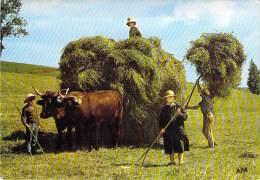 AGRICULTURE Paysans Moissons : La Fenaison ( Attelage Avec Deux Boeufs ) - CPSM GF - - Landwirtschaftl. Anbau