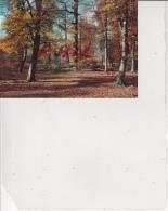 Fontainebleau - Aspect De La Forêt En Automne, Ref 1512-1305 - Fontainebleau