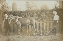 Horse With Plough.       RPPC. - Chevaux