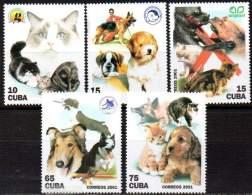 CUBA 2001 - Chiens Et Chats (5)