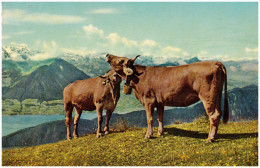 Zwitserland/Der Schweisz, Rigi-Rotstock, Morgentoilette, Ca. 1960 - SZ Schwyz