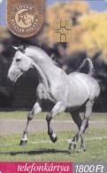 Horses - Hongrie