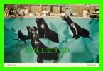 PHOQUES - SEAL  OR SEA LION AT SEA WORLD - - Animaux & Faune