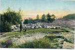 SCHNEVERDINGEN  - 1907 , Schäfer Mit Herde - Wilhelmshaven