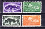 SAHARA ESPAAGNOL 1955, 4 TIMBRES ** MNH, POISSON, FISH .  (6N51) - Peces