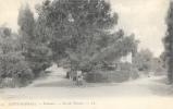 Saint-Raphaël - Valescure - Un Pin Parasol - Carte LL Précurseur N°19 - Arbres
