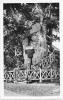 Allouville-Bellefosse Près Yvetot - Chêne Millénaire Renfermant 2 Chapelles Superposées - Carte Gaby Non Circulée - Arbres