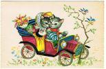 CHATS  SORTIE EN VOITURE - Katten