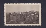 Petite Photo Orginale Scène De  Vendanges à Oubia Herault Village De Beaufort Dans Le Fond ( Animée Septembre 1934 ) - Places