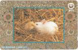 JAPAN - Rabbit & Bird(231-180), Used - Konijnen
