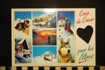 CP, Animaux, CHIEN Saint Bernard Et Husky Coup De Coeur Pour Les Alpes - Chiens