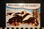 CP, Animaux, CHIEN  Bon Courage Au Boulot    Image De Montagne - Chiens