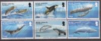 Antarctic.Britisch Antarctic Territory.2015.Whales.MNH.22332 - Brits Antarctisch Territorium  (BAT)