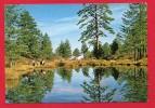 CPM: Chypre (Cyprus)  - Troodos Forest - Chypre