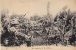 Afrique () Benin - Les Bananiers De Myrrhia - Benin