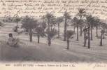 Afrique () Tunisie - Scènes Et Types - Groupe De Palmiers Dans Le Désert - Tunisia