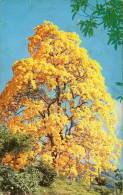 Lote PEP927, Colombia, Postal, Postcard, Arbol De Guayacan, Tree, 10131 - Colombia