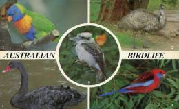 Lote PEP932, Australia, Postal, Postcard, Aves, Bird, Parrot, Emu, Birdlife - Australia