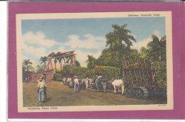 CUBA - HABANA PESANDO CANA Weighing Sugar Cane - Cuba