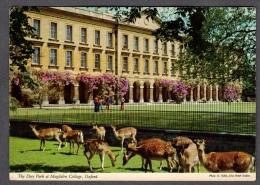 OXFORD THE DEER PARK AT MAGDALEN COLLEGE FG V SEE 2 SCANS - Oxford