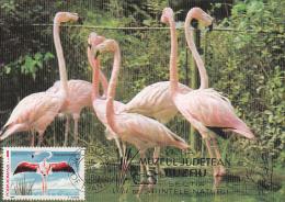 35143- AMERICAN FLAMINGOS, BIRDS, MAXIMUM CARD, 1989, ROMANIA - Fenicotteri