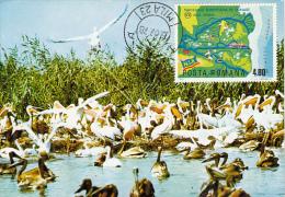 35149- PELICANS, BIRDS, MAXIMUM CARD, 1978, ROMANIA - Pellicani
