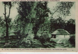 Notre-Dame-de-Monts..  La Rive En Bordure De Forêt Ormeaux Une Bourine - Autres Communes