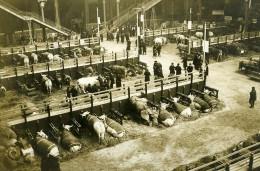 France Paris Grand Palais Concours Agricole Vaches Ancienne Photo Rol 1913 - Professions