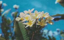 AMERIQUE---ANTILLES--VIERGES--frangipani One Of The Exotic Tropical Flowers --voir 2 Scans - Vierges (Iles), Amér.